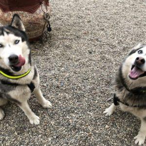 Dakota (R) & Kairo (L)
