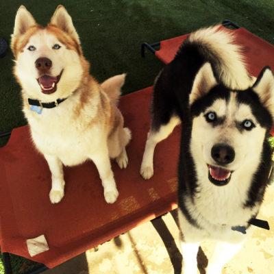 Ember (L) & Ash (R)