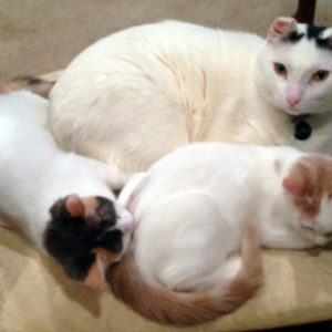 Heather's cat pack: Cleo, Freya and Leonora